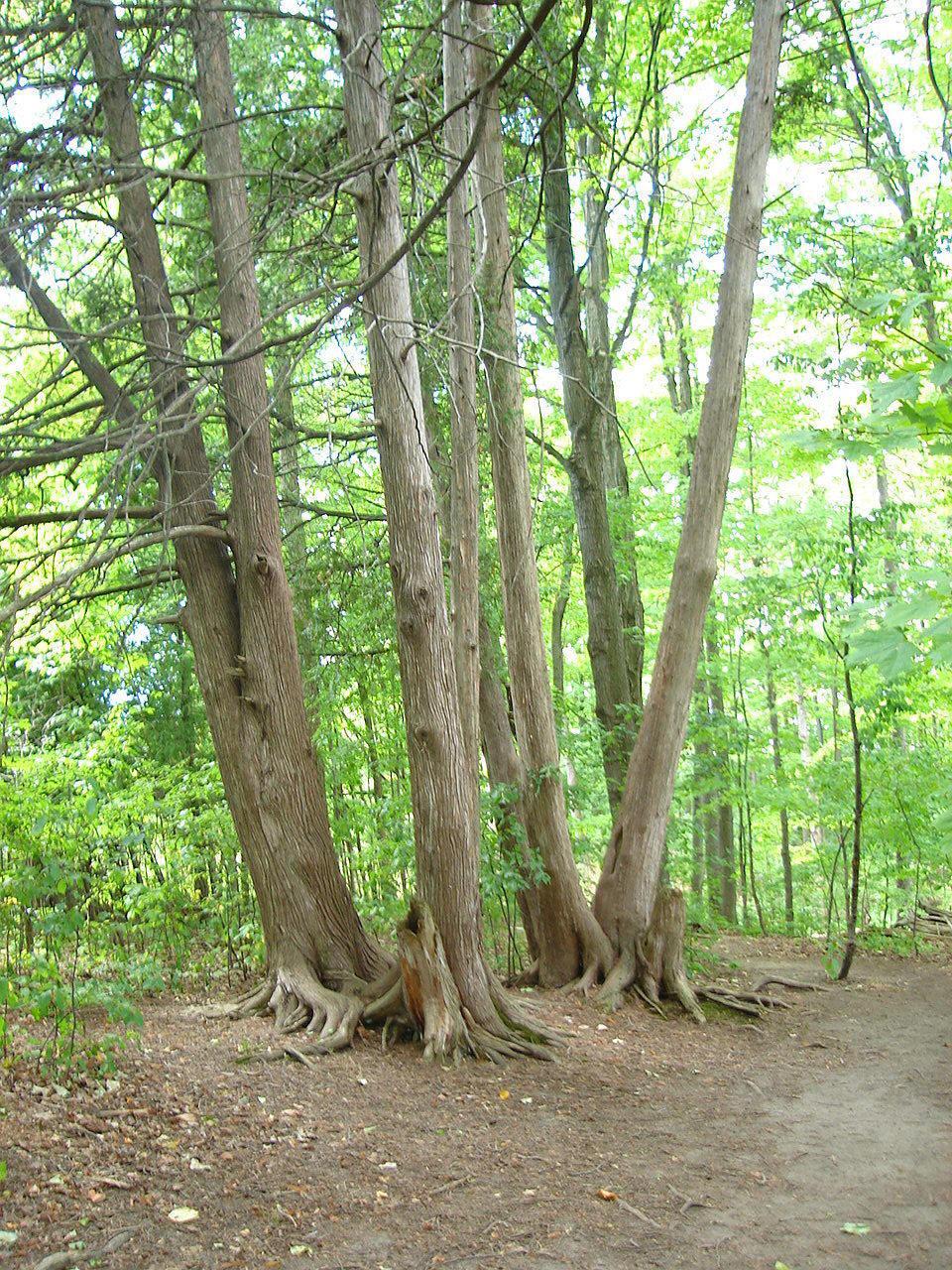 Citaten Over Bomen : Tellegen toon